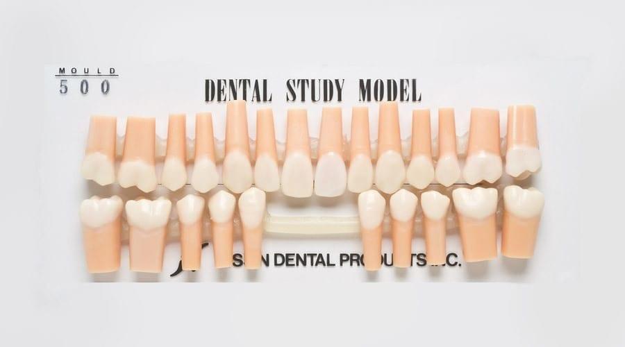 Teeth for Dental Study Models | MORITA